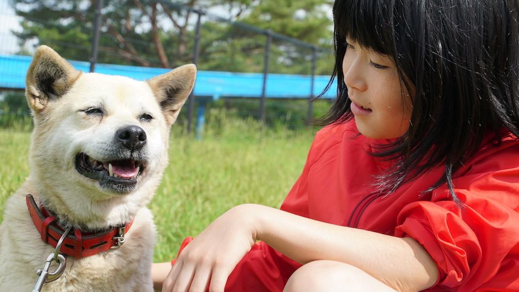 保護犬を低血糖の探知ができる「低血糖アラート犬」に育成するための挑戦が進行中!